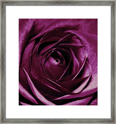 Purple Passion Framed Print by Cathie Tyler
