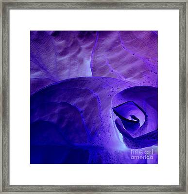Framed Print featuring the photograph Purple Passion by Erica Hanel