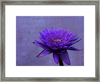 Framed Print featuring the photograph Purple Passion by Judy Vincent