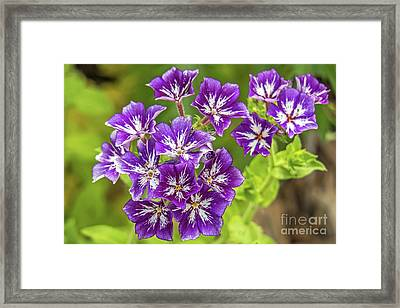 Purple Passion Framed Print by Kate Brown