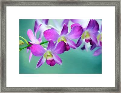 Purple Passion Framed Print by Lori Deiter