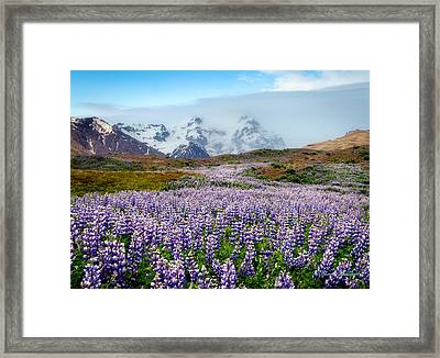 Purple Pathway Framed Print