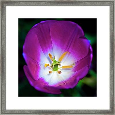 Purple Perfection Framed Print by Tamyra Ayles
