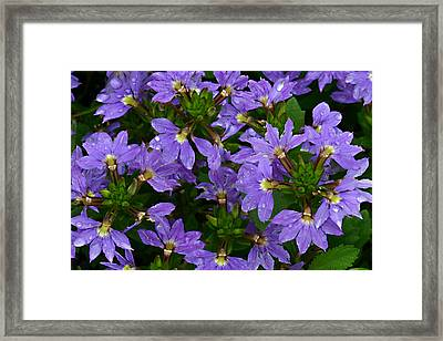 Framed Print featuring the photograph Purple Perspective by Shari Jardina