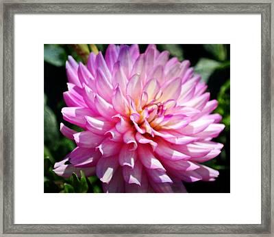 Purple Petals 8x10 Framed Print by Marty Koch
