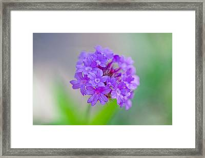Purple Petals Framed Print by Az Jackson