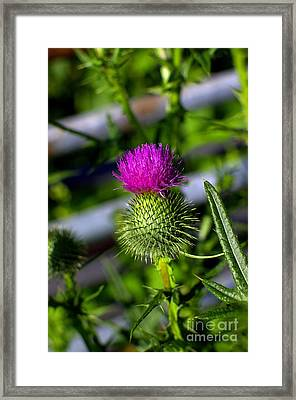Purple Pin Prick Paradise Framed Print by The Stone Age