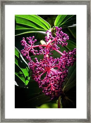 Purple Plant Framed Print