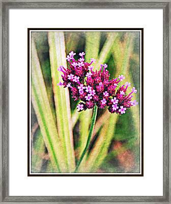 Purple Pleasure Framed Print by Elizabeth Babler