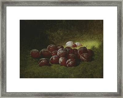 Purple Plums Framed Print by Carducius Plantagenet Ream
