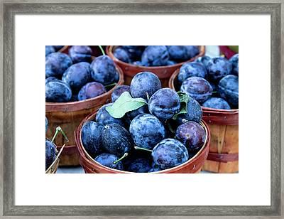 Purple Plums Framed Print by Teri Virbickis