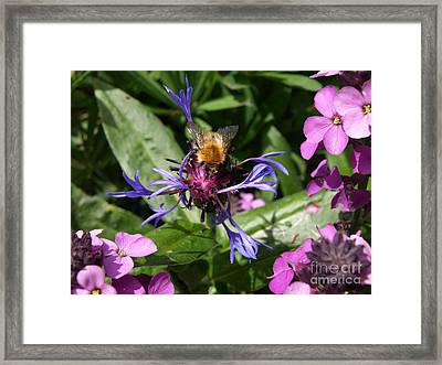 Purple Pollination Framed Print by Richard Brookes