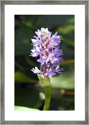 Purple Pond Stem Framed Print by James Granberry