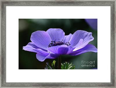 Purple Poppy Mona Lisa Framed Print