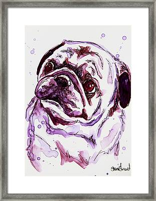 Purple Pug Framed Print by Shaina Stinard