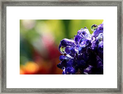 Purple Rain Framed Print by Gary Yost