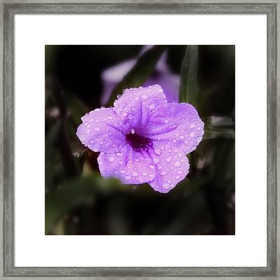 Framed Print featuring the photograph Purple Rain by Joseph G Holland