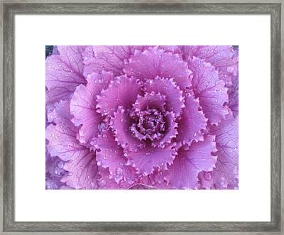 Purple Rain Framed Print by Kim Pascu
