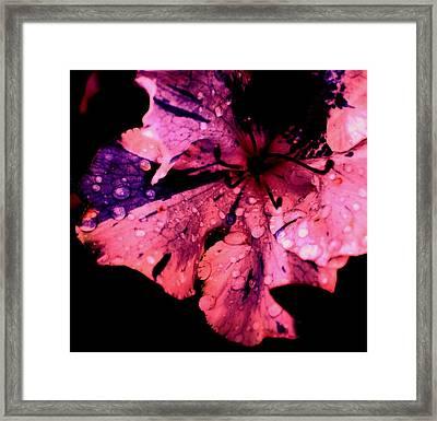 Purple Rain Framed Print by Trudi Southerland