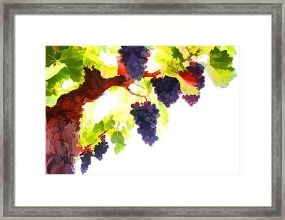 Purple Red Grapes With Green Leaves On The Vine Framed Print by Lanjee Chee