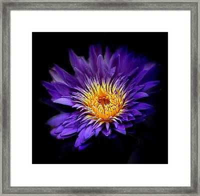 Purple Reign Framed Print by Jessica Jenney
