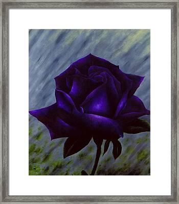 Purple Rose Framed Print by Brandon Sharp