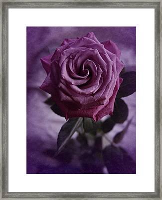 Purple Rose Of December Framed Print by Richard Cummings