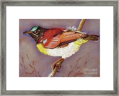 Purple Rumped Sunbird Framed Print