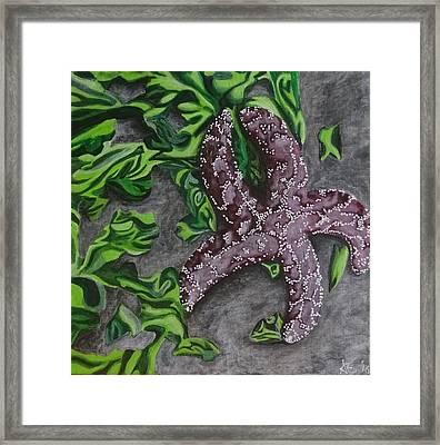 Purple Sea Star Framed Print by Amelia Emery