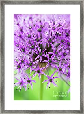 Purple Sensation Framed Print
