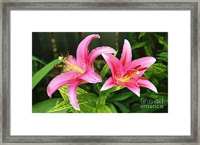 Purple Sensation Watercolor 2008 Framed Print