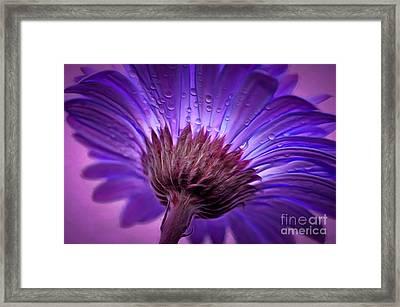 Purple Serenity Framed Print