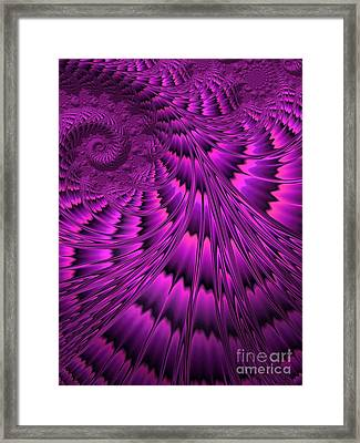 Purple Shell Framed Print by John Edwards