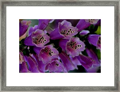 Purple Silk Framed Print