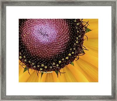 Framed Print featuring the photograph Purple Spirals by David Coblitz