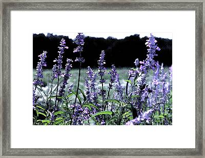 Purple Splendor Framed Print