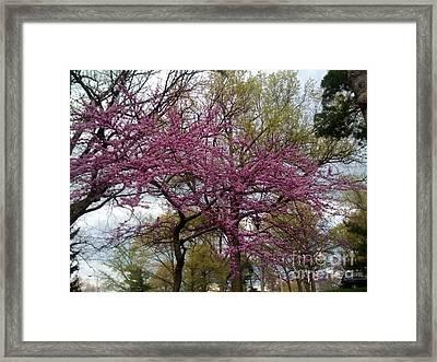 Purple Spring Trees Framed Print