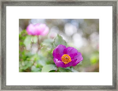 Purple Spring Wild Flower Romantic Nature Framed Print
