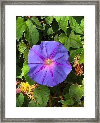 Purple Star Framed Print