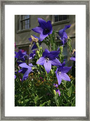 Purple Stars Framed Print by Alan Rutherford