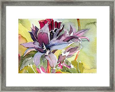 Purple Stem Aster Framed Print by Mindy Newman