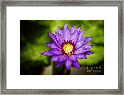 Purple Sunrise Framed Print by Scott Pellegrin
