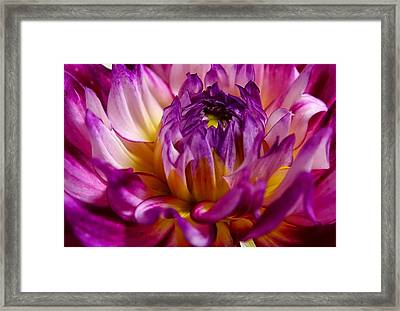 Framed Print featuring the photograph Purple Sunset Flower 2 by Marianne Dow