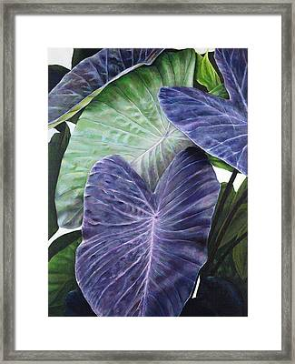 Purple Taro Framed Print by Sandra Blazel - Printscapes