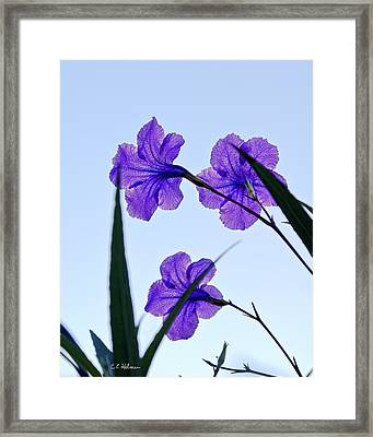 Purple Trio Framed Print