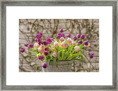 Framed Print featuring the photograph Purple Tulips In A Bucket by Patricia Hofmeester