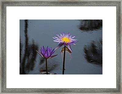 Purple Two-step Framed Print