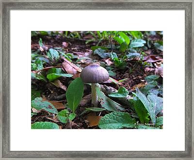 Purple Umbrella Mushroom Framed Print by Karen Roberson