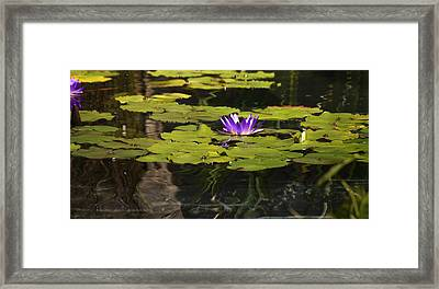 Purple Water Lilly Distortion Framed Print by Teresa Mucha