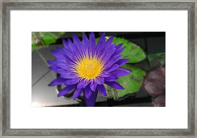 Purple Way Delight Framed Print